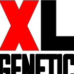 XL Genetic - SEO freelancer Asturias